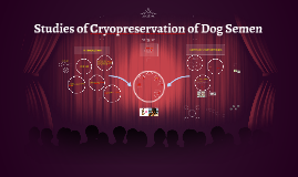 Studies of Cryopreservation of Dog Semen
