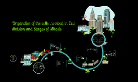 Copy of Organelles of the cells involved in Cell division and Stages