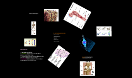 Human Structure and Movement by Mr. Chipps