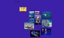 Oceans Habitat