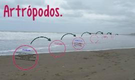 Copy of Copy of Artropodos