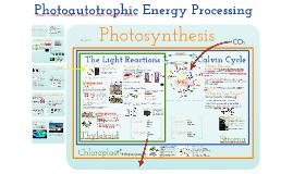 AP Bio- Energy IQ 3.5:  Photoautotrophic Nutrition