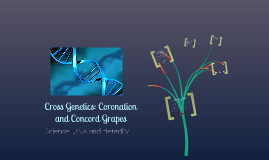 Cross Genetics: Coronation and Concord Grapes