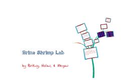 Brine Shrimp Lab