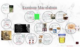 Conium Macolatum