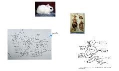 anatomy  Leonardo