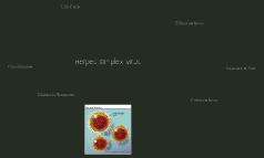 Herpes Simplex Virus a.k.a. Warts