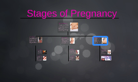 Copy of Stages of Pregnancy