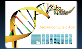Copy of Biology: DNA