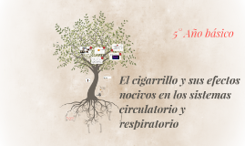 El cigarro y sus efectos nocivos en los sistemas circulatori