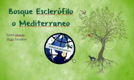 Bosque Esclerófilo o Mediterraneo