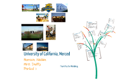 University of California- Merced