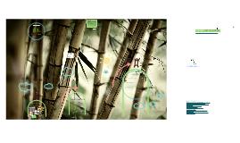 #3. Taller de Bambú. Técnicas de Construcción y Preservación del Bambú.
