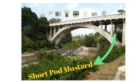 Short Pod Mustard
