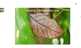 Copy of Lesson 3 Adaptation and Survival