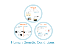 Chapter 14-3:  Human Genetic Conditions