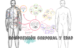 composición corporal y sus cambios en las etapas de la vida