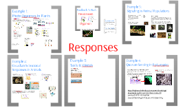 AP Bio- Regulaton 7:  Responses