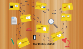 River Blindness Life Cycle