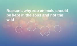 Reasons why zoo animals should be kept in zoos and not the w