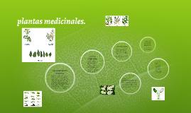 Copy of plantas medicinales.
