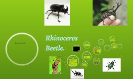 Introduction of Rhinoceros Beetles