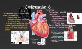 Cardiovascular <3