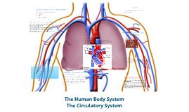 Human Body System~Circulatory