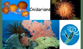 Cnidarians