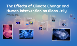 The Effects of Climate Change and Human Intervention on Moon