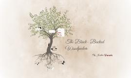 The Black- Backed Woodpecker