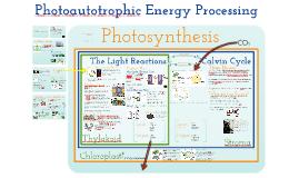 AP Bio- Metabolism: Photoautotrophic Nutrition