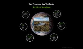 San Francisco Bay Wetlands