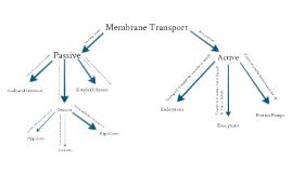 Cell Transport Concept Map Www Picsbud Com