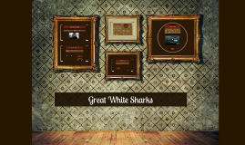 Copy of Great White Sharks