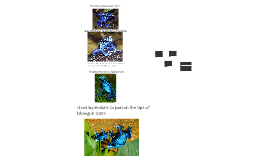 Blue Poison Dart Frog !
