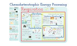 AP Bio- Metabolism 2: Chemoheterotrophic Nutrition
