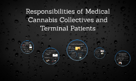 Responsibilities of Medical Cannabis Collectives and Terminal Patients