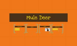 Jack Mule Deer
