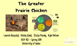The Greater Prairie Chicken