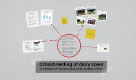 Crossbreeding of dairy cows