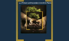 14.2 Primary and Secondary Growth in Plant