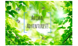 Animal Adventures