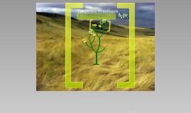 Temperate Grasslands Biome