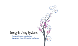Chapter 9: Energy in Living Systems