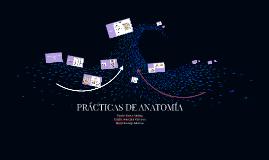 Copy of Prácticas Anatomía.