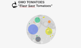 "GMO TOMATOES - ""Flavr Savr Tomatoes"""