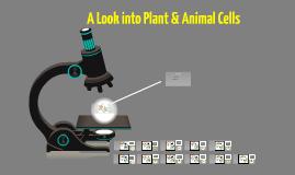 Shanae Metcalf- per3:Plant & Animal cell