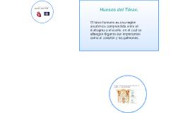 Huesos del Tórax.