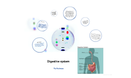 digestive system - tia